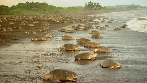 Tortuguero Travel Package